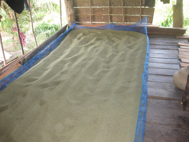 Mombasa seed drying, Mukdahan, Nov 2010