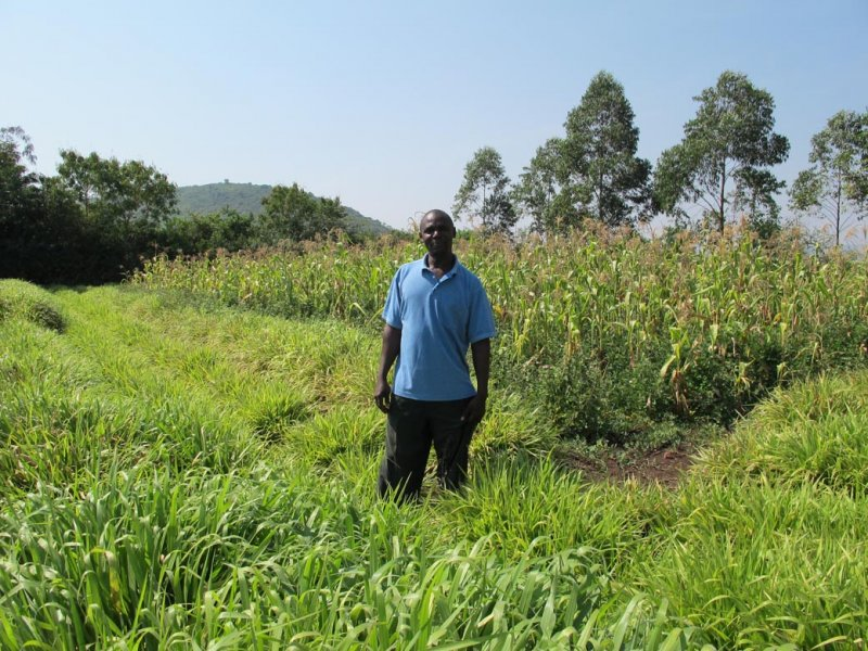 Mulato II a farmer in his well stablished pasture Kenya