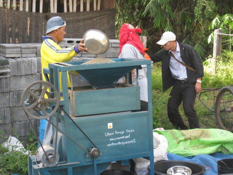Limpiando semilla Tanzania en la villa