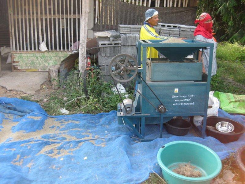 Limpiando semilla Tanzania en la villa 2