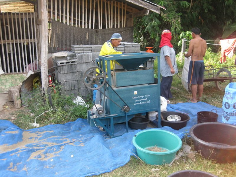 Cleaning Tanzania seed