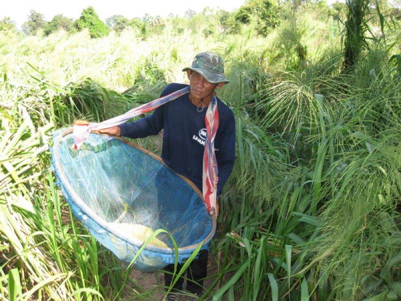 Harvesting Tanzania