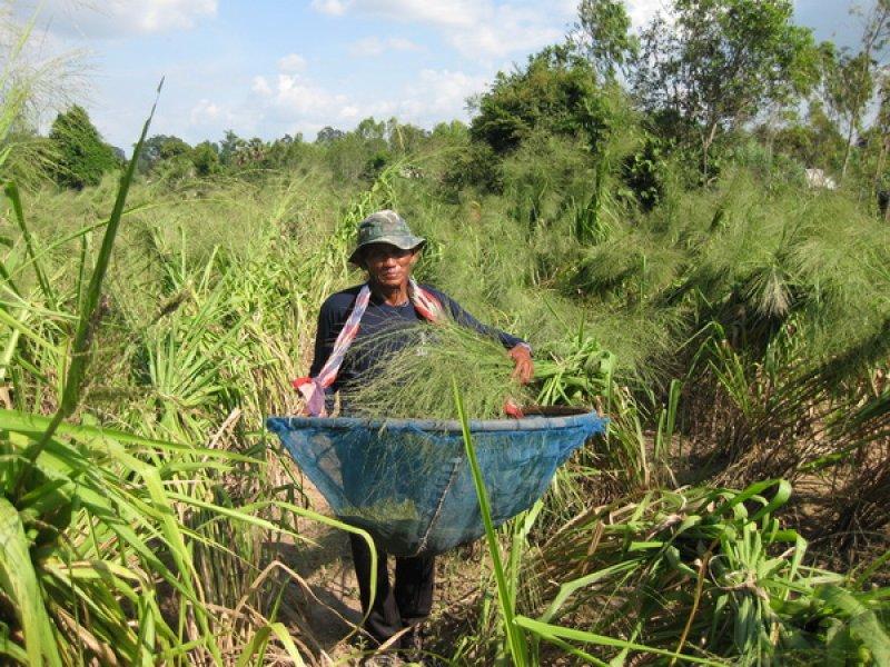 Harvesting Tanzania 2