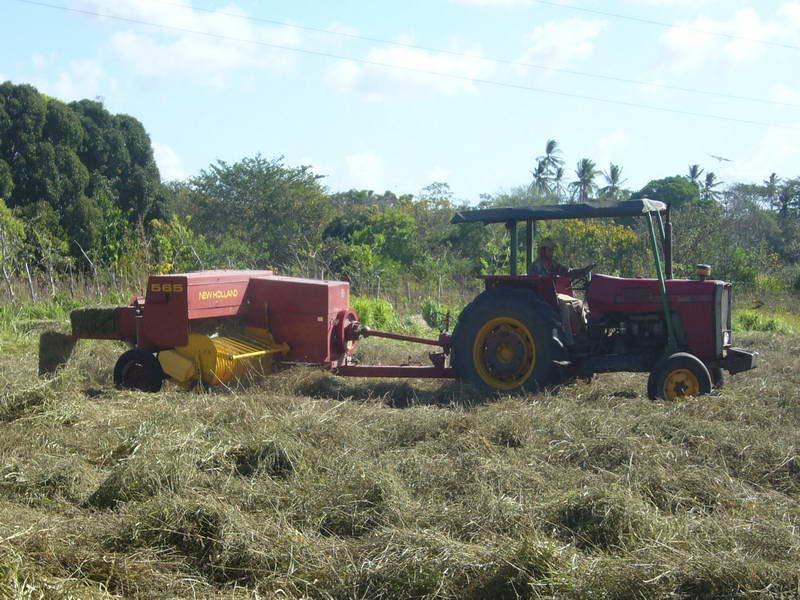 Ubon Stylo hay in Panama 2