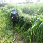 mombasa-seed-crops-2016-october-18_06
