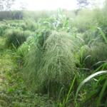 mombasa-seed-crops-2016-october-18_08