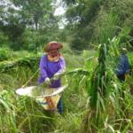 mombasa-seed-crops-2016-october-18_8