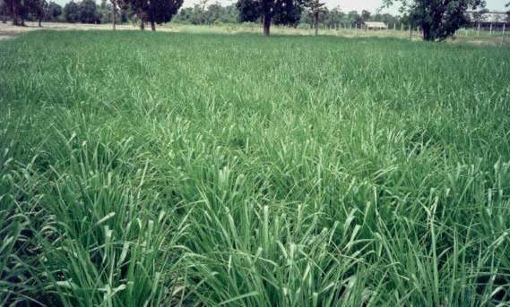 Biomass-production-1