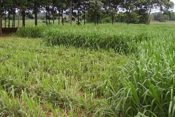 Biomass-production-10