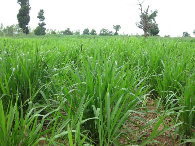 Biomass-production-12