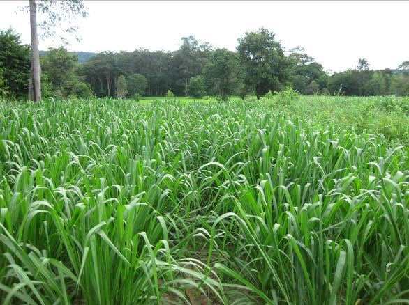 Biomass-production-5