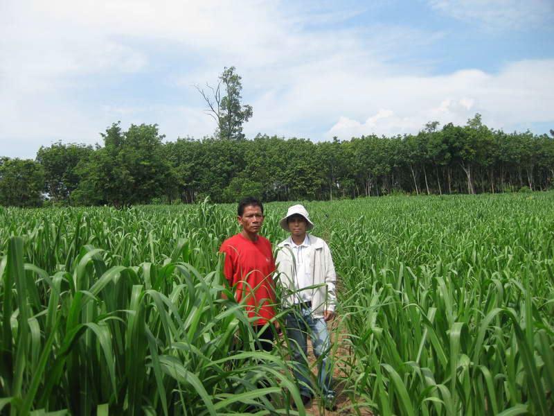 Biomass-production-6