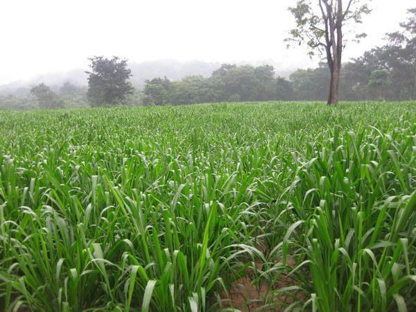 Biomass-production-7