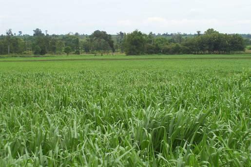 Biomass-production-9