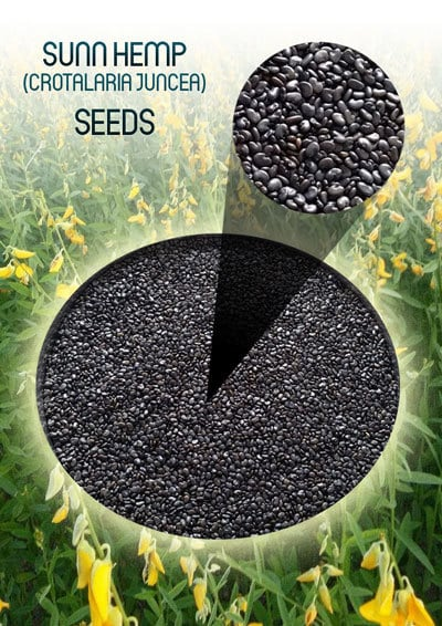 Crotalaria Juncea - Sunn Hemp Seeds