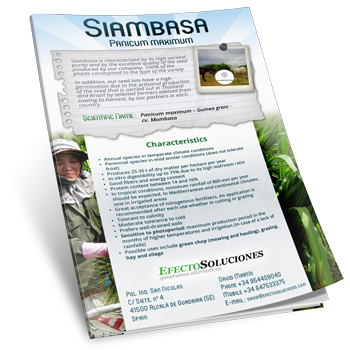 Siambaza. Technical & Commercial Brochure. Tropical Seeds.