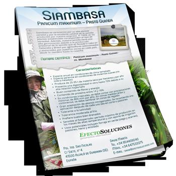 Siambaza. Folleto técnico y comercial. Tropical Seeds.