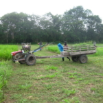 bracharia-trial-2016-september-cutting-whole-plots-after-sampling_5