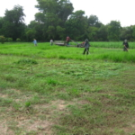 bracharia-trial-2016-september-cutting-whole-plots-after-sampling_9