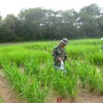 mombasa-seed-trial-serptember-2016-applying-fertiliser_2