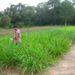 mombasa-seed-trial-serptember-2016-applying-fertiliser_4