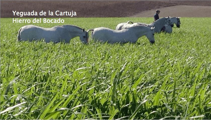 yeguada_de_la_cartuja