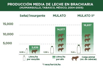 Producción media de leche con híbridos Brachiaria
