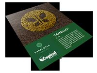 Camello Technical Brochure. Tropical Seeds.